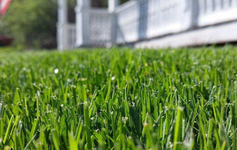 a close up of a lawn in a residential yard
