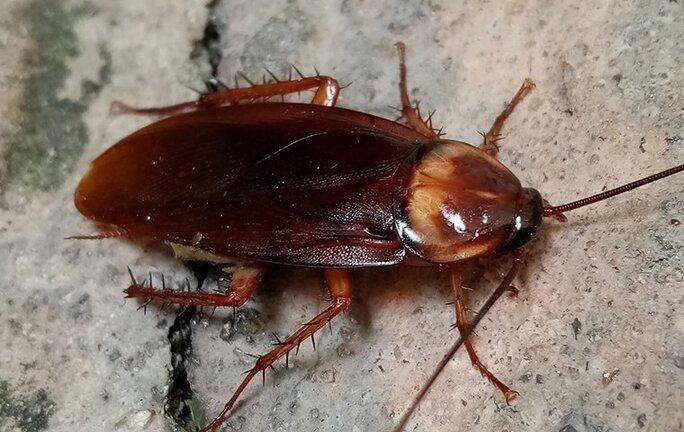 close up of cockroach on foundation