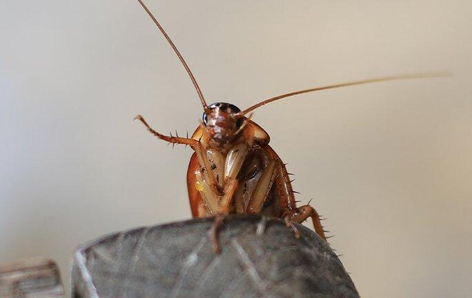 cockroach infesting home