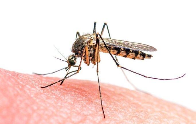 mosquito biting hand of skin