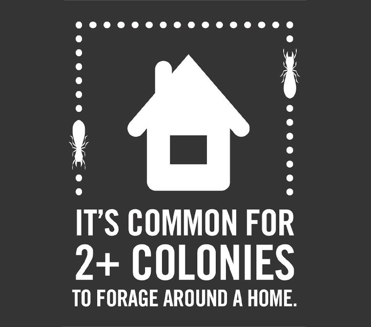 ensec termite infographic
