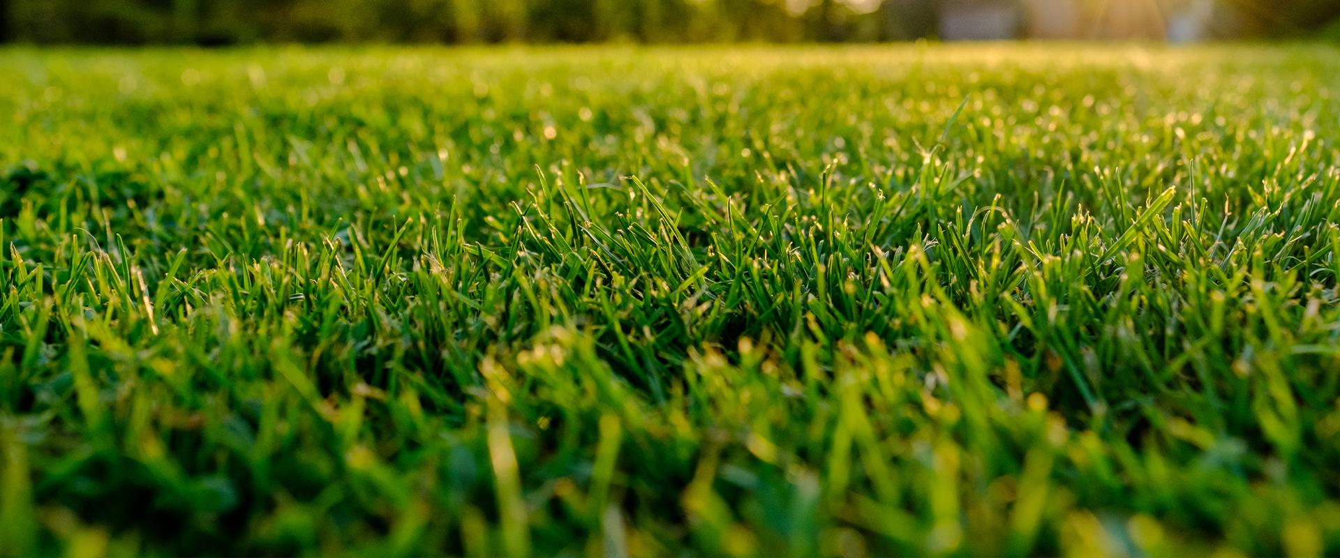 close up of grass in front lawn
