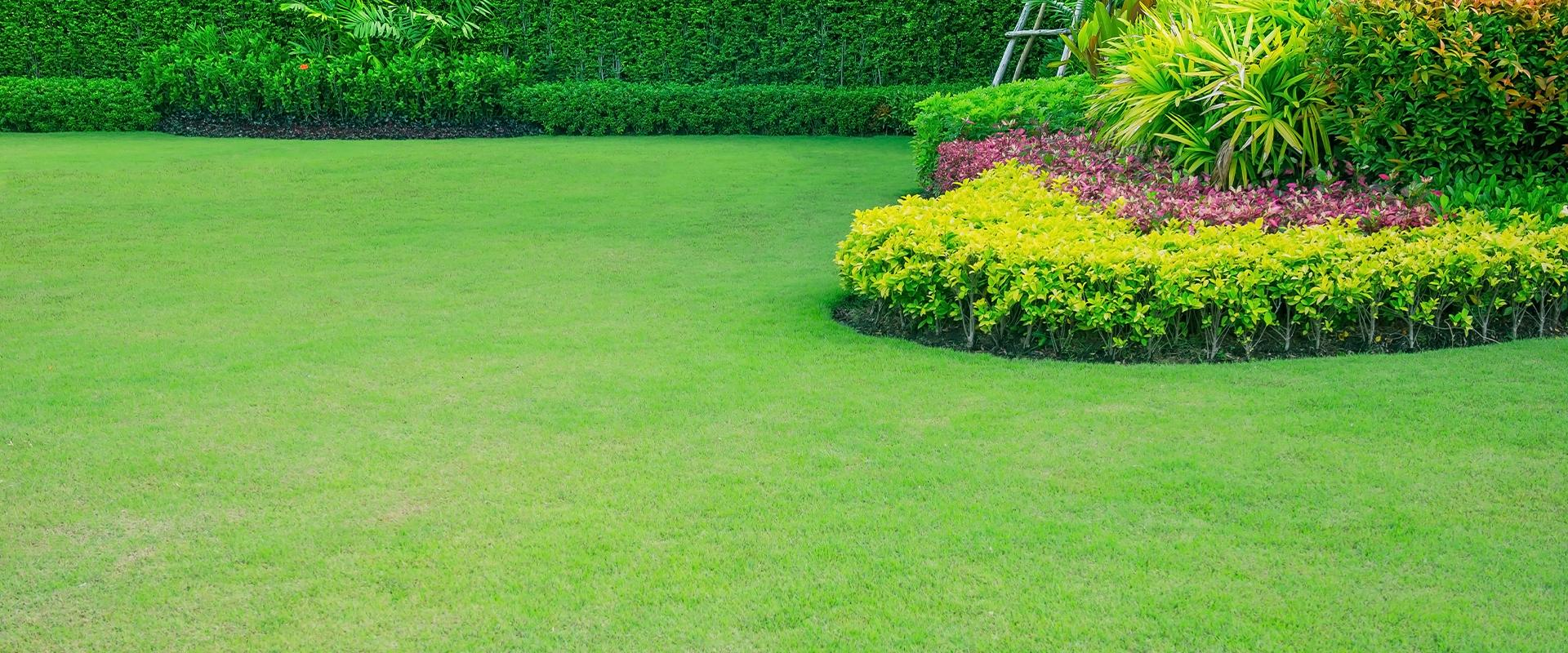 shrubs and greenery in lawn landscape