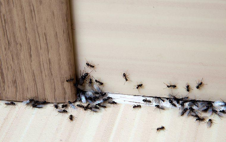 ants crawling on wall