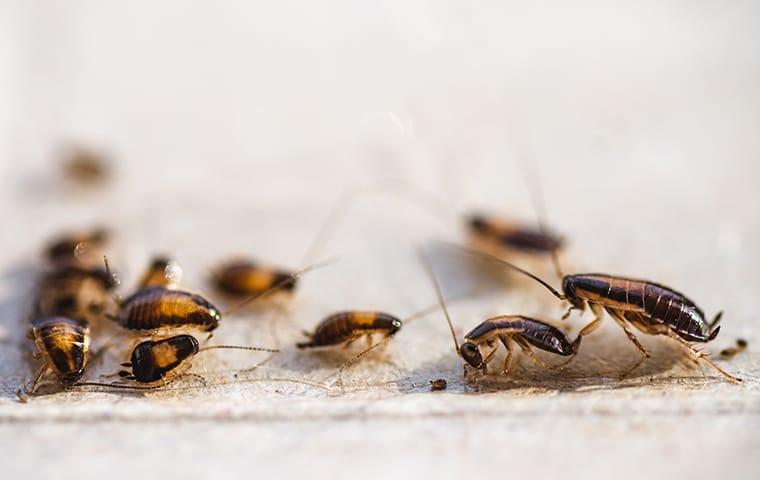 an infestation of cockroaches inside of a home in eastover south carolina