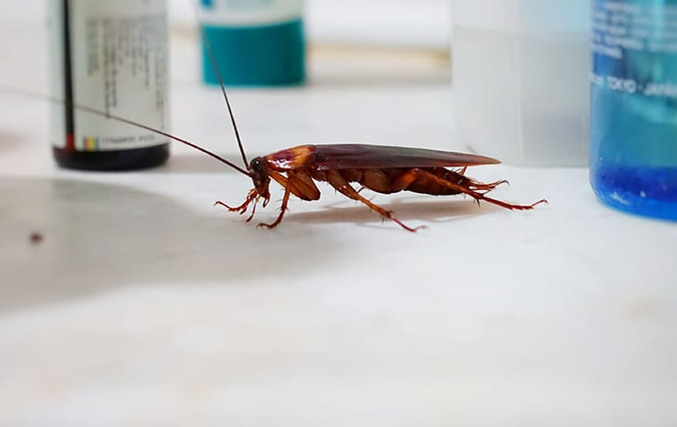 a cockroach crawling on a surface inside of a home in red bank south carolina
