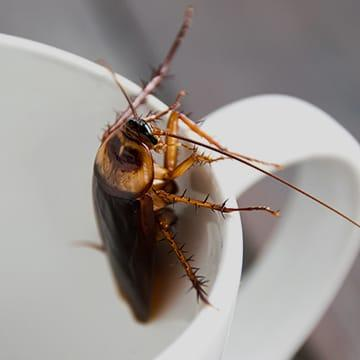 a cockroach crawling out of a cup inside of a home in lexington south carolina