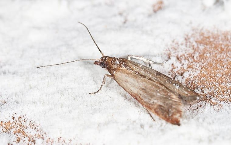 a moth inside of a home in gaston south carolina