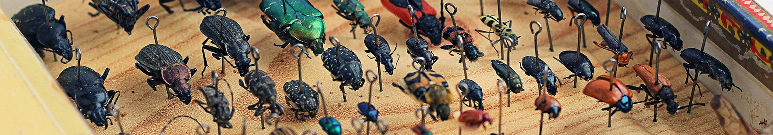 a collection of bugs pinned to a board for science