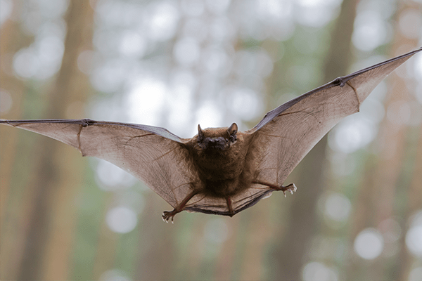 bat flying in the yard of a florida suburb