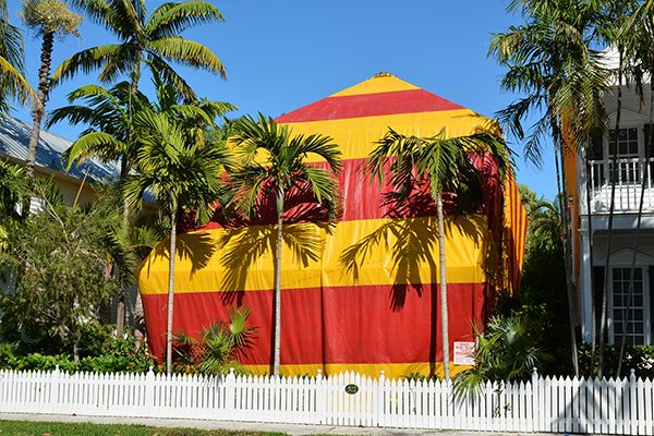 fumigation tent killing insects