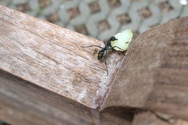 ant outside florida home