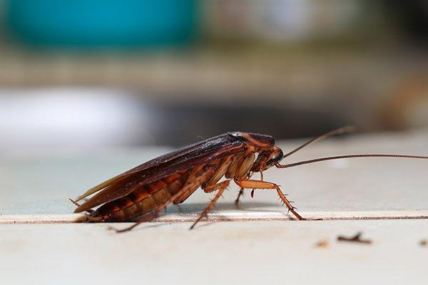 a cockroach crawling on a kitchen floor