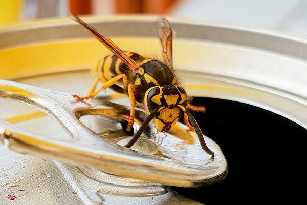 hornet crawling on soda can