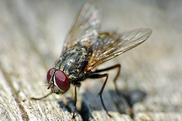 up close image of a house fly on a picnic table