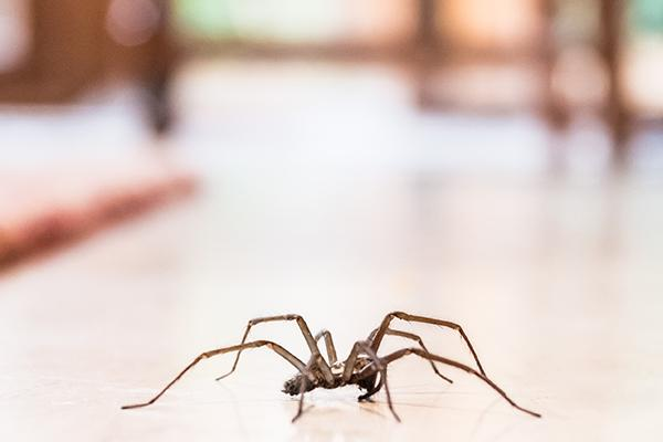 spider inside of a home