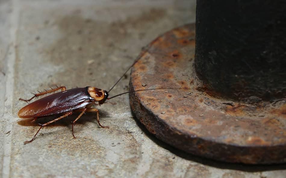 cockroach near a pipe