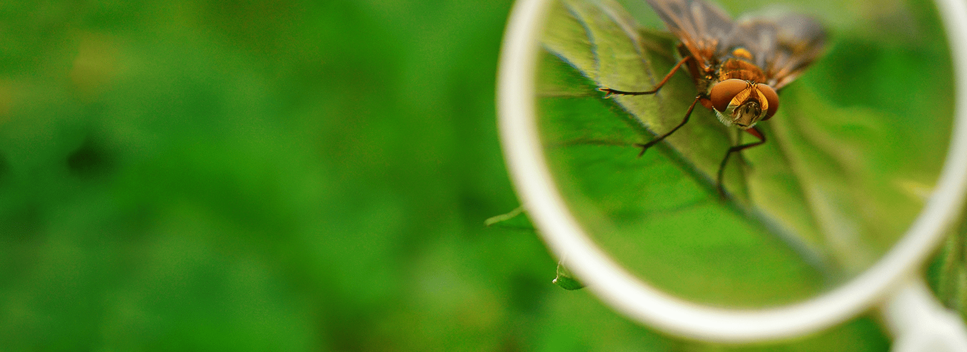 insect under a magnifying glass in a residential yard