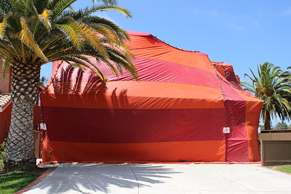 fumigation tent used to exterminate pests in florida