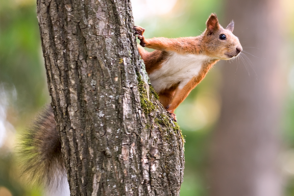 tree squirrel clinging to a tree trunk in manatee county florida