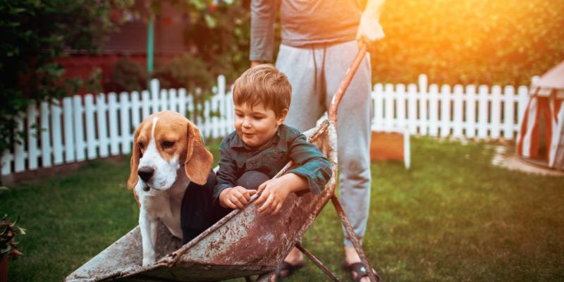 Dog and boy in a wheelbarrow