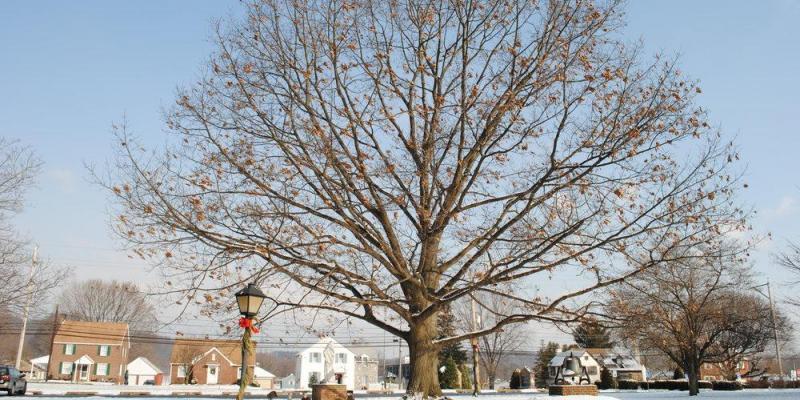 January 2020 Newsletter: Winter Landscaping & Lynch Updates
