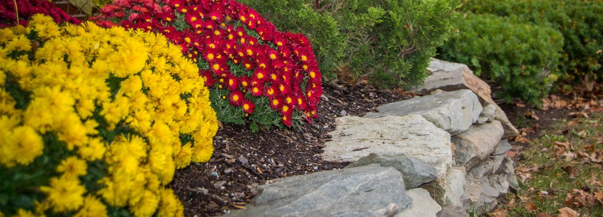 Yellow and red flowers in a retaining wall