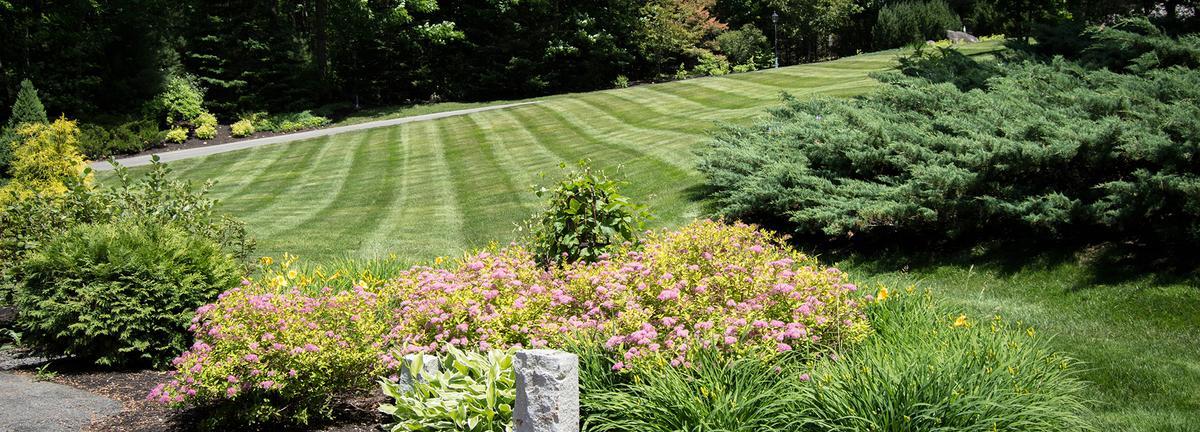 Tardiff mowed lawn