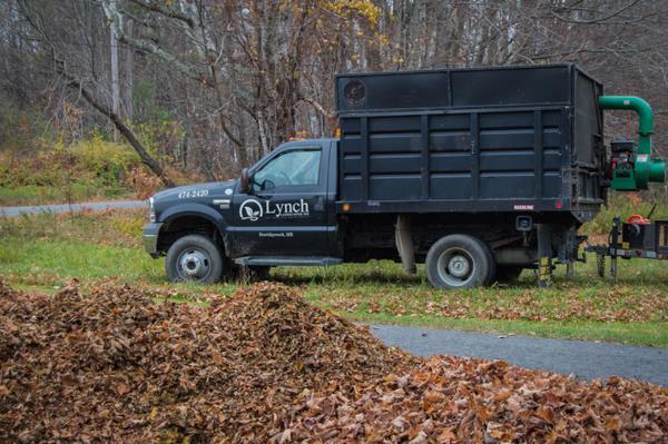 Fall leaf cleanup