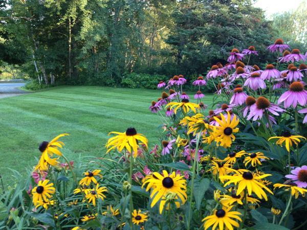 John's mowed lawn