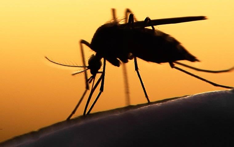 a mosquito biting a persons leg at dusk