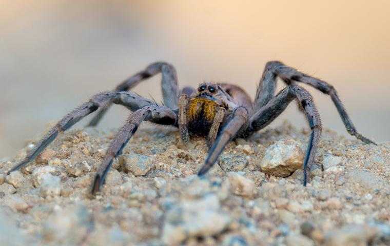 a spider on gravel