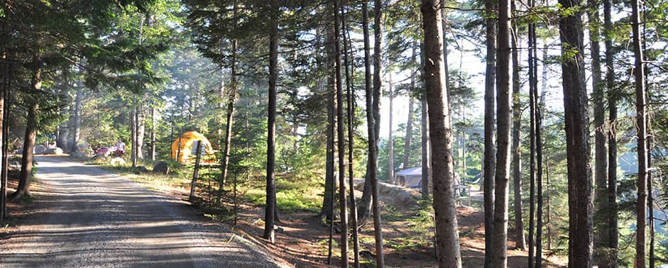 road with multiple campsites in the woods