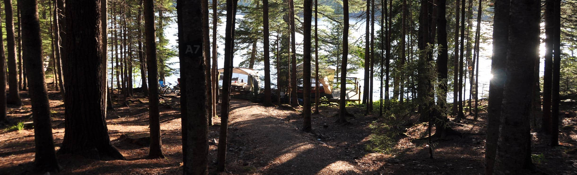 waterfront campsite surrounded by woods