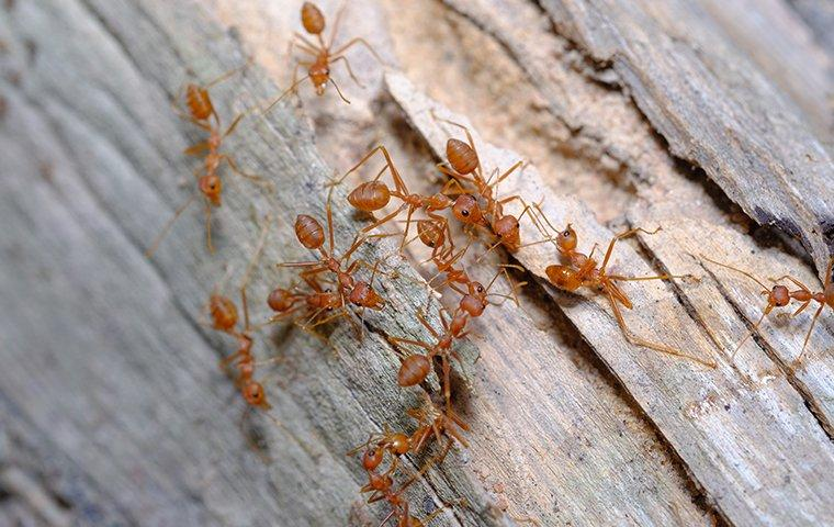 ants crawling on a wooden structure outside of a home