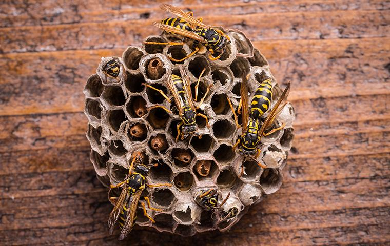 wasps sitting on a nest