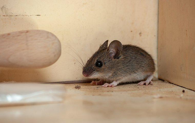 a mouse crawling on the floor inside of a home