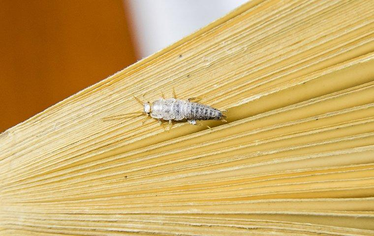 a silverfish crawling on a book inside of a home