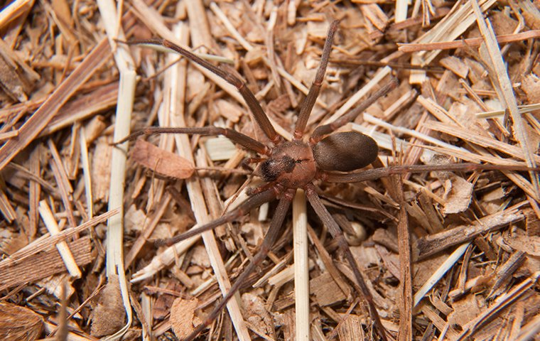 a spider crawling on the ground outside of a home