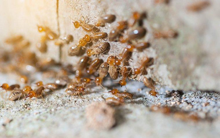 a colony of termites crawling on the exterior wall of a home