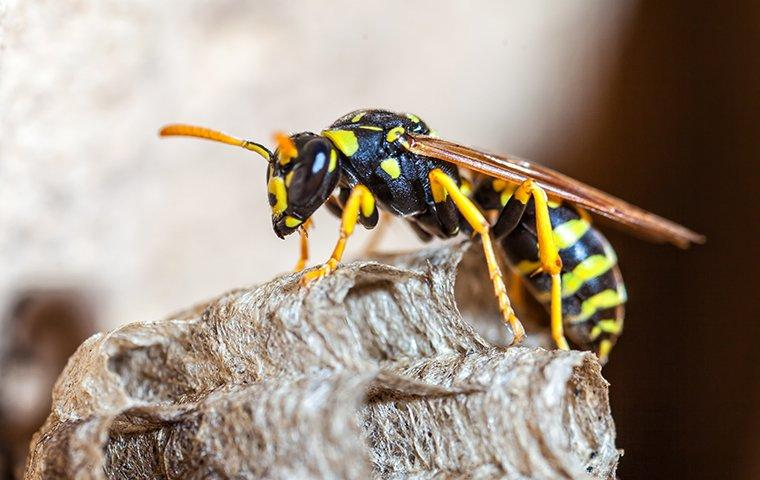 a wasp perched on a tree outside of a home