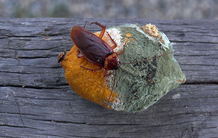 cockroach on a stone