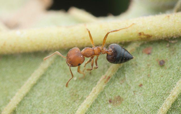conover ant control serving a home garden