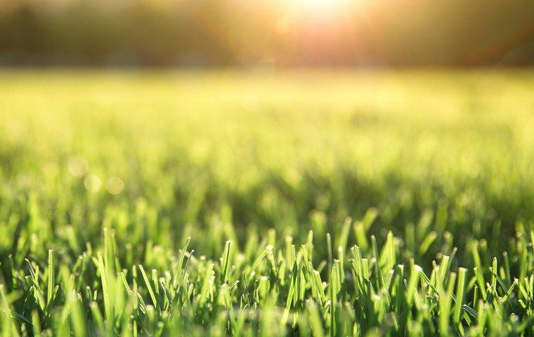 a healthy green lawn