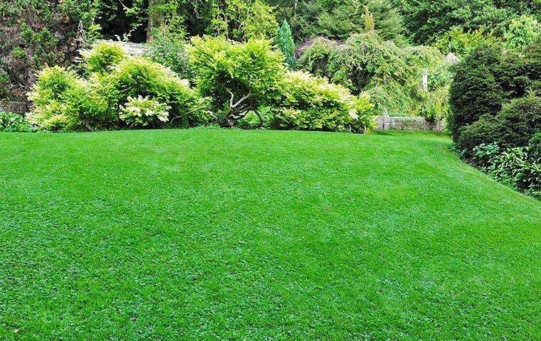 green manicured lawn