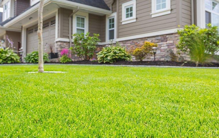 a healthy lawn next to a home