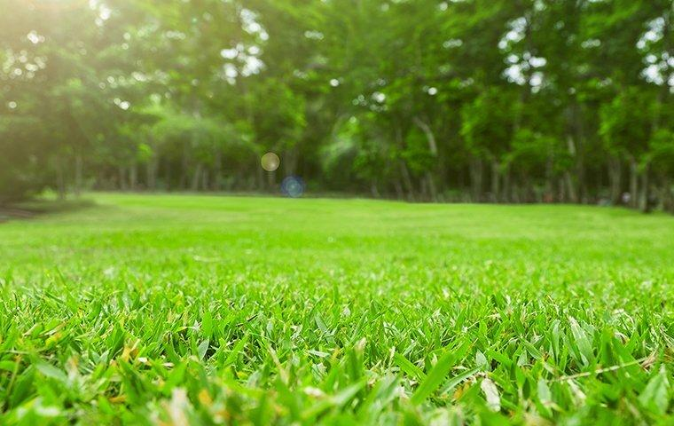 a healthy lawn treated with pest control services