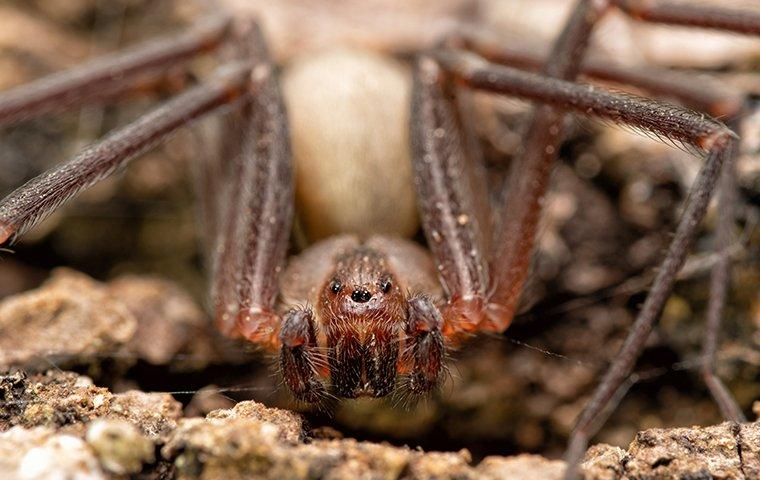 house spider in basement