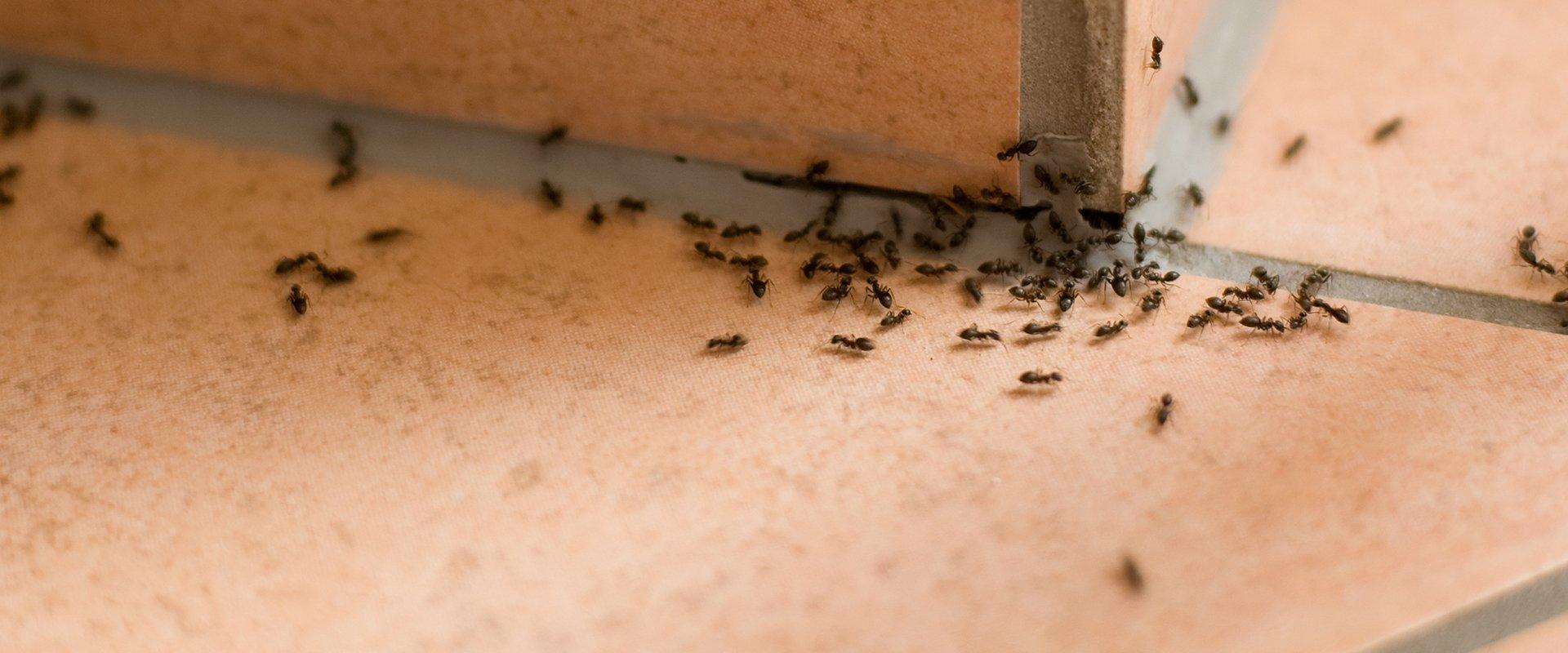 ants in a bathroom