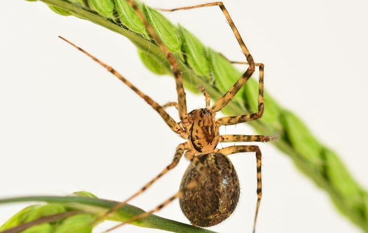 a spider crawling on a charlotte house plant
